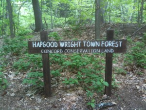 A trip through fairy land | Louisa May Alcott is My Passionwright town